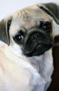 Adopt a Dog and Save a Life