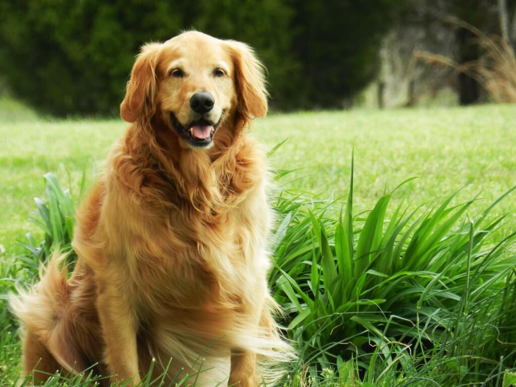 Thank You Dog - PA Dog Rescue